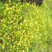 Kas Pathar Flowers Of Valley images6
